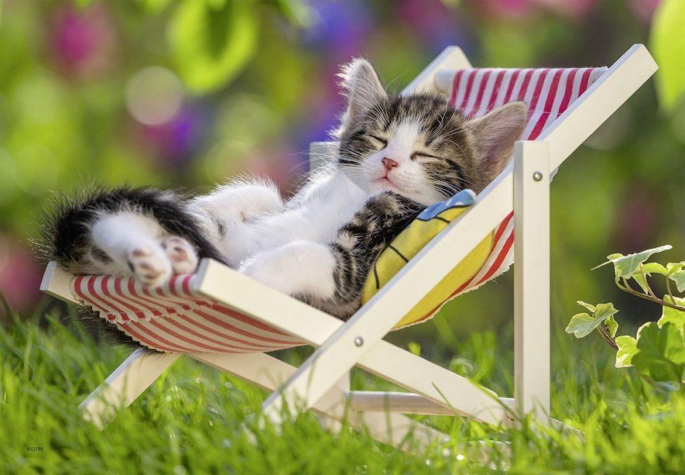Отдыхай котик картинки